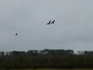 Geese over Jenny Bare Legs