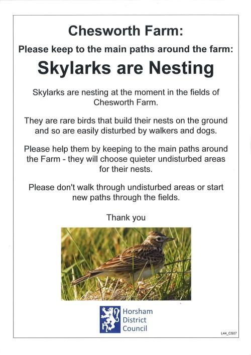 Nesting skylarks
