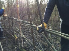 Completing hedgelaying along track_2 Jan16