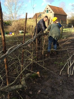 Completing hedgelaying along track_3Jan16