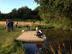 Pond dipping in Back Field
