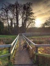 steves-dog-on-boarwalk-10-jan-17sk