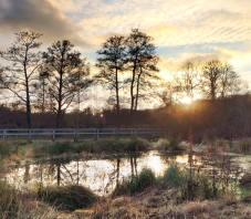 Wetland evening: Steve Knight