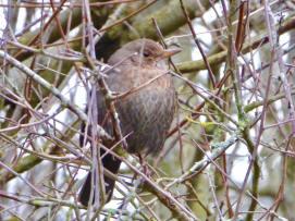 Blackbird by Mick Jones
