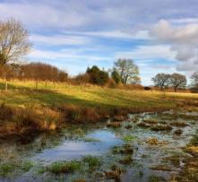 Wetland view: Steve Knight
