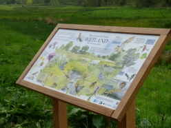 The wetland interpretation board, adding information on site