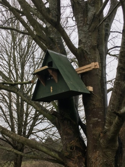 New owl nest box