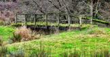Moss-covered bridge in wetland_31 Dec 17_Peter Merchant