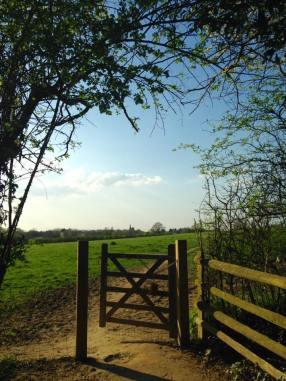 Evening walk, gate into base of Gt Horsham Hill_20 April 2018_HB