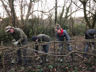 Coppicing in the Warren, alongside Pedlars Way, just below the Volunteer Centre