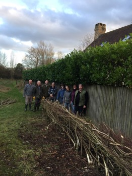 Cutting and laying Blackthorn, Dogwood and Hazel into a new laid-hedge