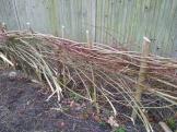 Hedgelaying session 2_Hedge#1_VC garden_1 Feb 20_David Verrall