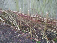 Hedgelaying session 2_Hedge#1_VC garden_1 Feb 20_David Verrall
