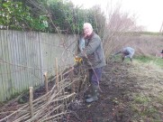 Hedgelaying session 2_Jim Ashworth_VC garden_1 Feb 20_David Verrall