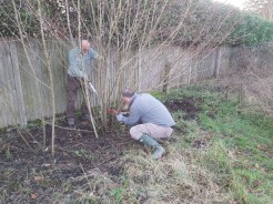 Hedgelaying session 2_Tim Thomas and Michael Ayling_VC garden_1 Feb 20_David Verrall