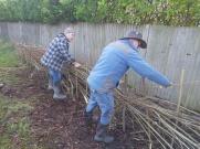 Hedgelaying session 2_VC garden_1 Feb 20_David Verrall