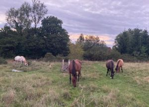 The horses grazing on the farm itself